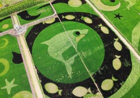 (تصاویر) تزیین مزارع در شانگهای چین در سالگرد حاکمیت جمهوری خلق چین