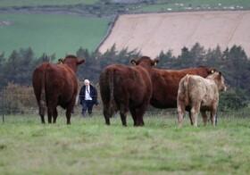 (تصاویر) دیدار بوریس جانسون نخست وزیر انگلیس از مزرعه ای در آبردین اسکاتلند