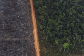 (تصاویر) نمایی از منطقه جنگلی در ویلانوا در برزیل که منطقه سوخته جنگلی در کنار منطقه ای نجات یافته از آتش سوزی و جاده ای که این دو را جدا می کند دیده می شود
