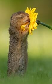 (تصاویر) تصویری از سنجابی در پارکی در وین اطریش در جستجوی غذا