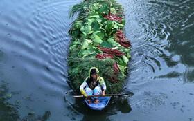 (تصاویر) زنی کشمیری در حال حمل سبزی روی دریاچه دال در کشمیر هند