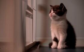 (تصاویر) نخستین گربه تولیدی از طریق شبیه سازی در چین که نامش را سیر گذاشته اند شبیه سازی یکه گربه در چین 35 هزار دلار هزینه دارد در چین تا کنون چهل سگ شبیه سازی شده که هزیه تولید هر سگ 53 هزار دلار اعلام شده است