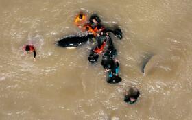 (تصاویر) تلاش فعالان محیط زیست برای نجات یک نهنگ در سواحل آرژانتین