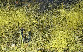 (تصاویر) طرفداران تیم دورتموند آلمان در بازی با تیم بارسلونا در دورتموند کاغذهای رنگی به هوا رها کرده اند