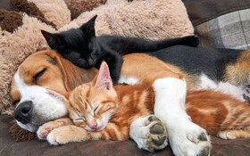 (تصاویر) نگهداری دو توله گربه توسط سگی در انگلیس