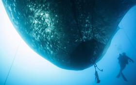 (تصاویر) تورماهیگیری در ساحل جزیره مدیترانه ای کورسیکا