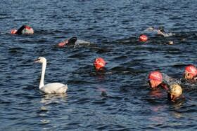 (تصاویر) شنا در دریاچه هایدپارک لندن تلاش خیریه ای برای کمک به مبارزه با سرطان