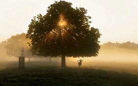 (تصاویر) گوزنی در پارکی مه گرفته در هنگام طلوع آفتاب در لندن
