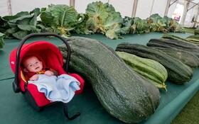 (تصاویر) نمایشگاه کشاورزی در انگلیس