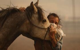 (تصاویر) نجات اسبی در آتش سوزی کالیفرنیا