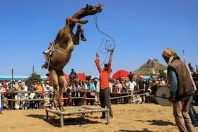 (تصاویر) چشنواره پرورش شتر در پوشکار هند