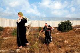 (تصاویر) زنان کشاورز فلسطینی در کنار دیوار حایل جداکننده کرانه باختری از مناطق اشغالی عبور می کنند