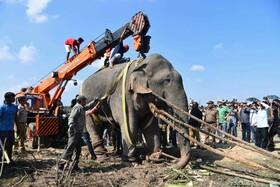 (تصاویر) فیلی که با حمله به روستائیان در منطقه گلپارا در هند موجب مرگ پنج نفر شده است با جرثقیل برای انتقال به منطقه جنگلی به وسیله نقلیه منتقل می شود