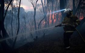 (تصاویر) تلاش برای خاموش کردن آتش سوزی جنگل های استرالیا