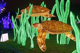 (تصاویر) موزه تاریخ طبیعی در پاریس فرانسه و چراغ های تزئینی که به شکل لاکپشت ساخته شده است