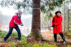 (تصاویر) مارین برگن شهردار اسلو در حال بریدن درخت کاجی که هرسال این شهر برای تشکر از کمک انگلیس به مردم این شهر در جنگ جهانی دوم برای سال نو میلادی به شهر لندن هدیه می دهد