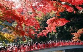 (تصاویر) نمایی از پاییز در توکیو ژاپن