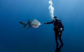 (تصاویر) لحظه دیدنی دیدار یک غواص با کوسه