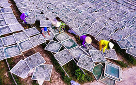 (تصاویر) خشگ کردن ماهی های کوچک در چین برای تولید سس ماهی