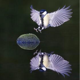 (تصاویر) فرود پرنده ای بر روی قطعه ای سنگ