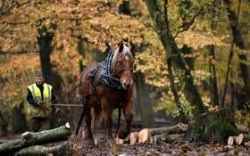 (تصاویر) قطع درختان در انگلیس