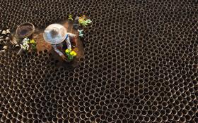 (تصاویر) کاشت گل در گلدان در میانمار