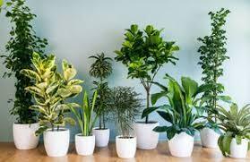 پنج روش برای بهبود کیفیت هوا در خانه