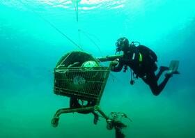 (تصاویر) پاکسازی دریا در سواحل یونان