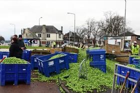 (تصاویر) حادثه هنگام انتقال محصولات کشاورزی در اسکاتلند