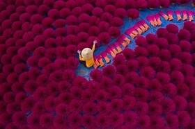 (تصاویر) اژدهای چاملون ، بازی ببر با تولیه ایمپالای قربانی ، گل بدبوی زافلزیا و..... در عکس های خبری روز