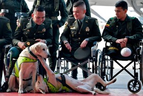 (تصاویر) پلیس ها در کنار سگ ها ضد مواد در بوگوتا در مراسم رسمی