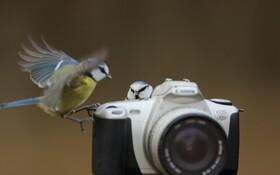 (تصاویر) بازی پرندگان در کنار دوربین عکاسی