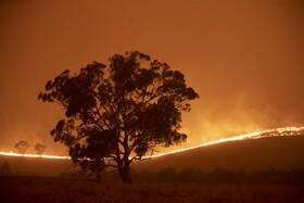 (تصاویر) آتش سوزی در کانبرای در استرالیا