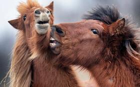 (تصاویر) پرورش اسب در فرانکفورت آلمان