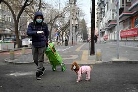 (تصاویر) مردی در پکن چین همراه سگش که هردو ماسک دارند در خیابان خالی از رهگذران