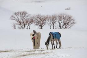 (تصاویر) چوپانی در وان ترکیه در حال کار با بره ای در بغل