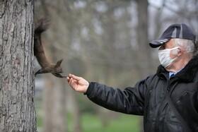 (تصاویر) غذا دادن به سنجابی در یک پارکی در صوفیه بلغارستان