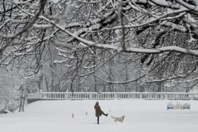 (تصاویر) پارکی پربرف در صوفیه بلغارستان
