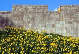 (تصاویر) نخستین شکوفه های بهاری در انگلیس کرونا زده