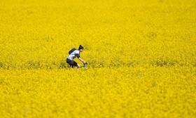 (تصاویر) تصویری زیبا از دوچرخه سواری در مزرعه