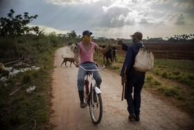 (تصاویر) چوپانی در کوبا با ماسک با دوستش سلام می کند