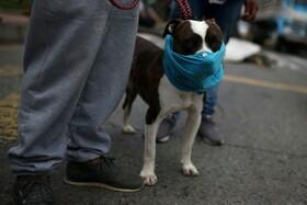 (تصاویر) تظاهرات در بوگوتا در کلمبیا برای درخواست کمک رسانی دولت به نیازمندان