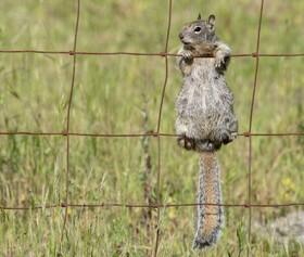 (تصاویر) سنجابی در حال بازی