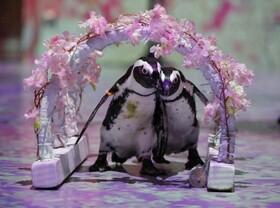 (تصاویر) صحنه ای از نمایش آنلاین حیوانات باغ وحش برای کودکان در توکیو ژاپن