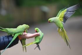 (تصاویر) دستان کمک کننده