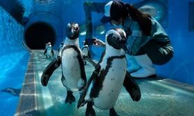 (تصاویر) نمایش جانوارن باغ وحش بصورت آنلاین در ژاپن