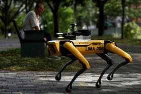(تصاویر) سگ رباتیک در سنگاپور که  به افرادی که در پارک هستند هشدار می دهد ماسک بزنند و فاضله را رعایت کنند