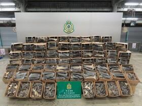 (تصاویر) کشف بزرگترین محموله قاچاق باله کوسه در هنگ کنگ