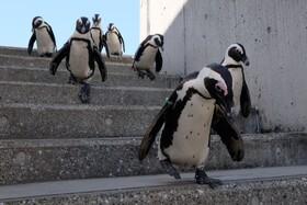 (تصاویر) نمایش حیوانات باغ وحش در ژاپن بصورت آنلاین