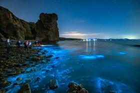 (تصاویر) نمایی از ساحل نورانی از موجودات شب تاب در چین